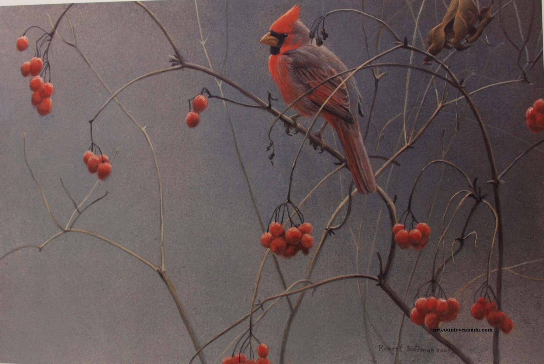 Robert Bateman Highbush Cranberries and Cardinal