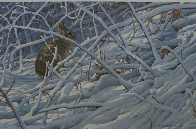 Robert Bateman In The Brier Patch Cottontail Rabbit
