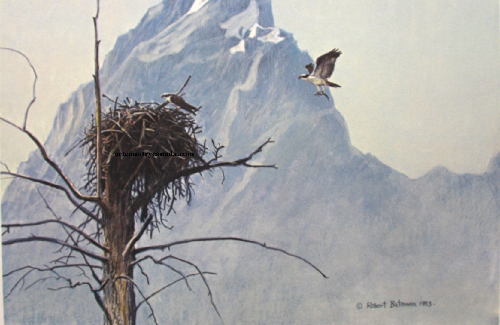 Robert Bateman In The Mountains Osprey