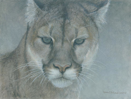 Robert Bateman Intent Cougar