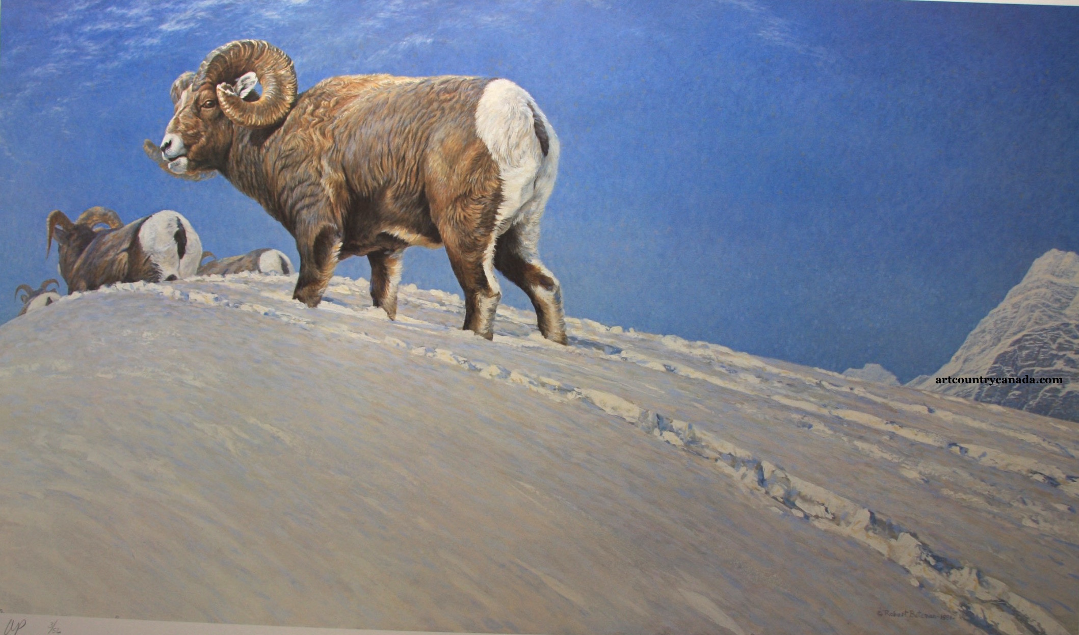Robert Bateman Last Look Bighorn Sheep