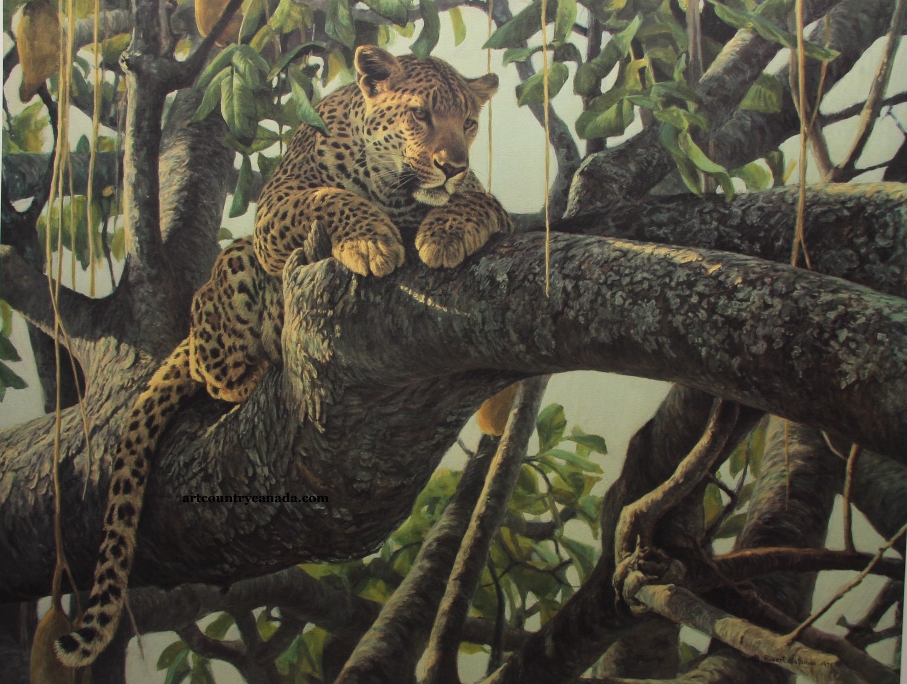 Robert bateman Leopard in a Sausage Tree