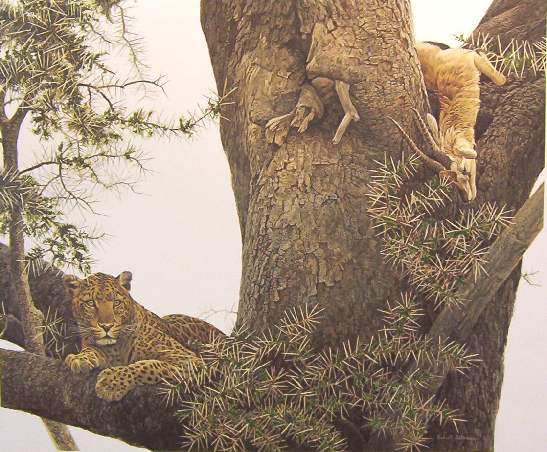 Robert Bateman Leopard and Thompson gazelle