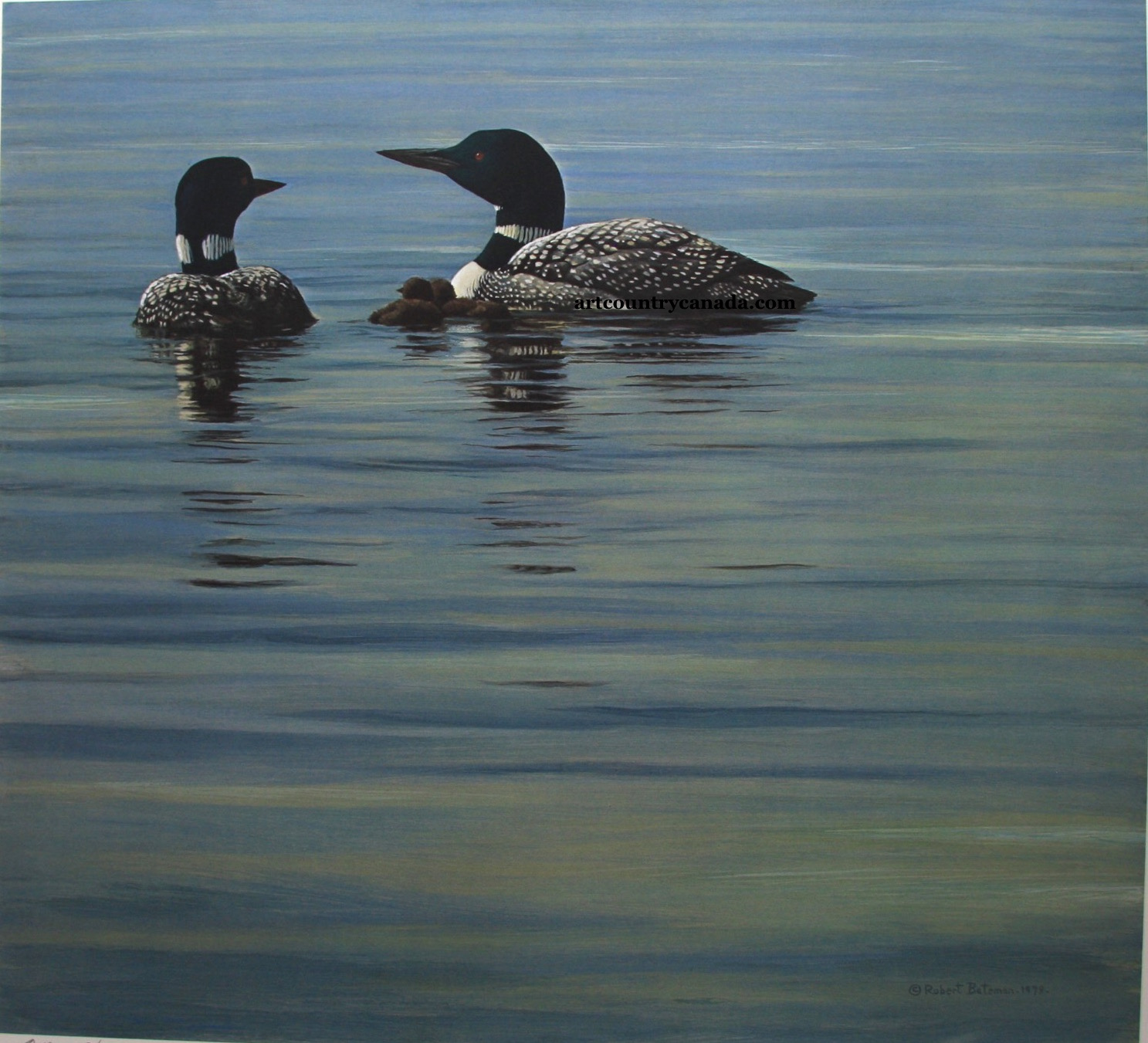 Robert Bateman Loon Family