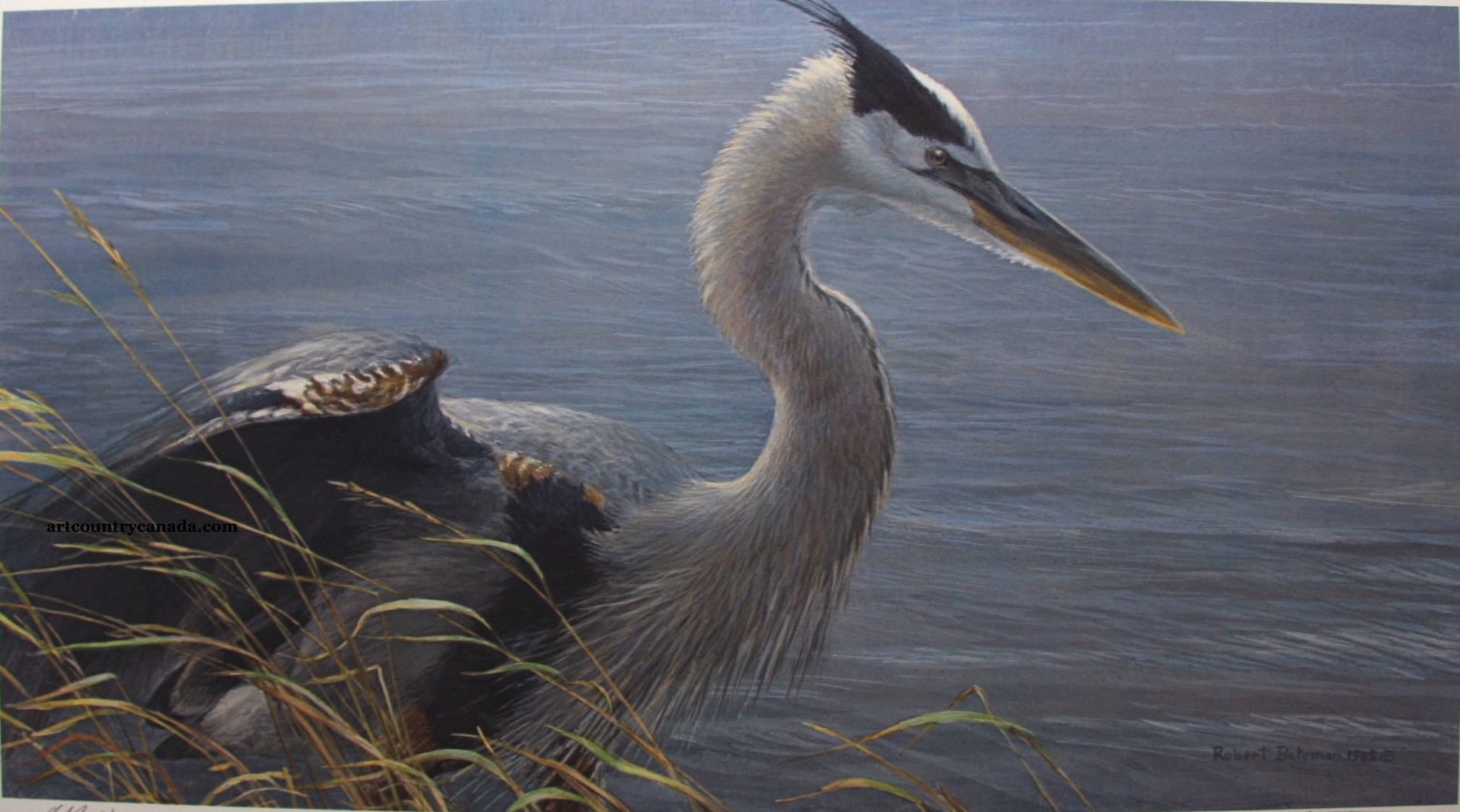 Robert Bateman Lunging Great Blue Heron