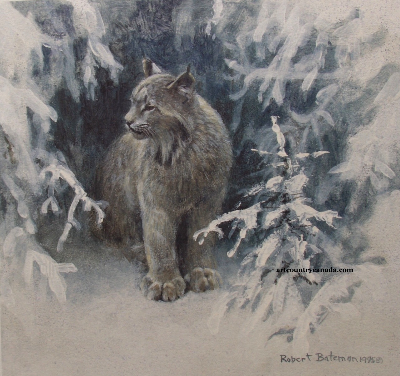 Robert Bateman Lynx In Snow