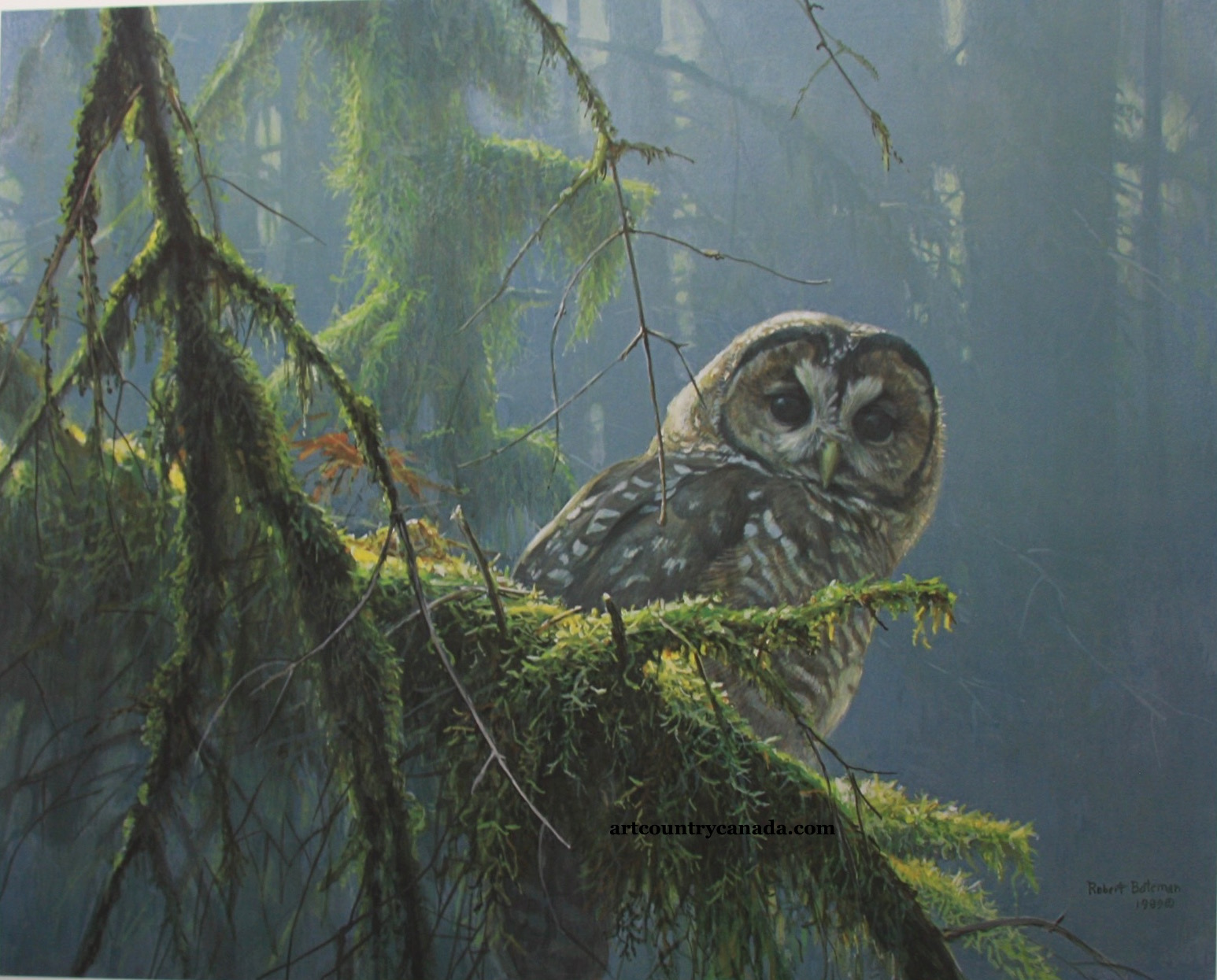 Robert Bateman Mossy Branches Spotted Owl