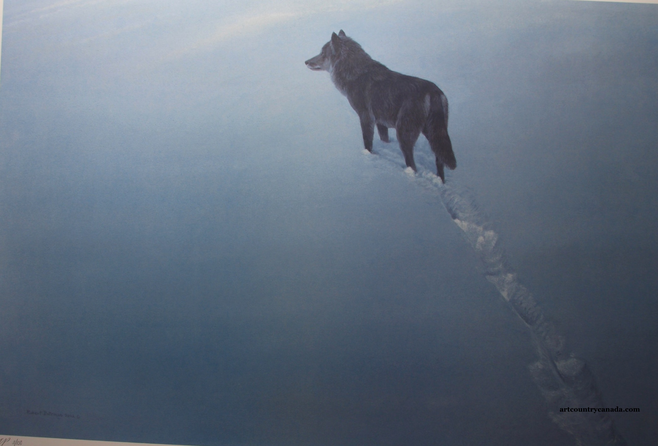 Robert Bateman New Territory Black Wolf