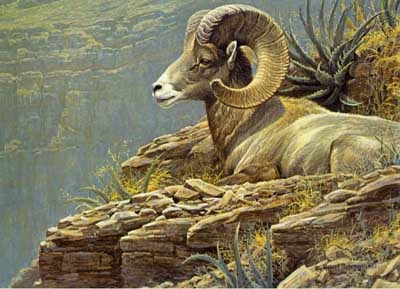 Robert Bateman North American Sheep Stamp Print