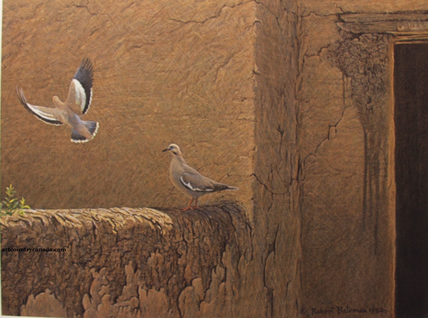 Robert Bateman Old Adobe White winged Doves