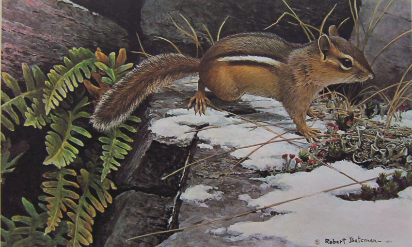 Robert Bateman On The Alert Chipmunk