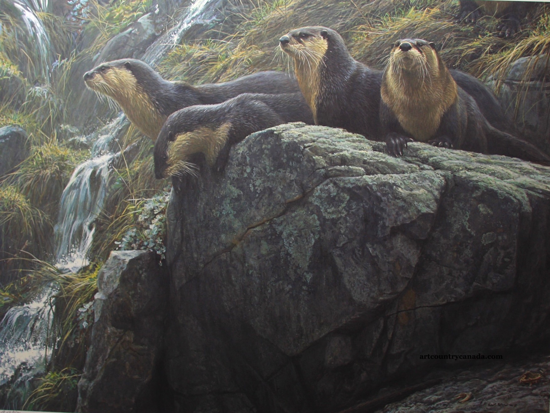 Robert Bateman On The Brink River Otters