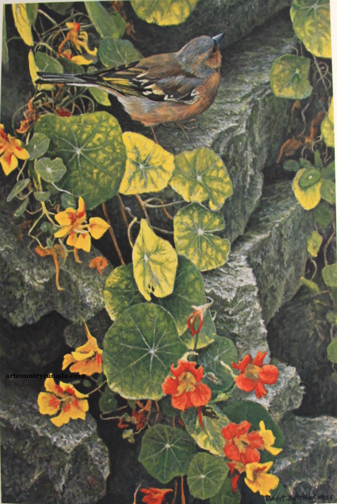 Robert Bateman On The Garden Wall