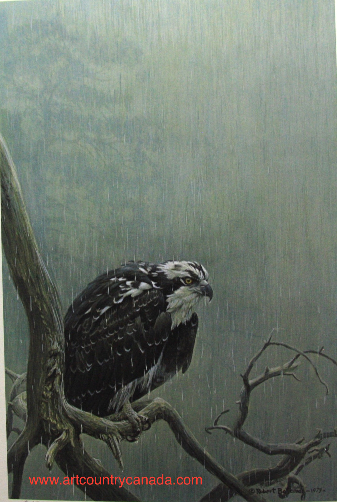 Robert Bateman Osprey In The Rain