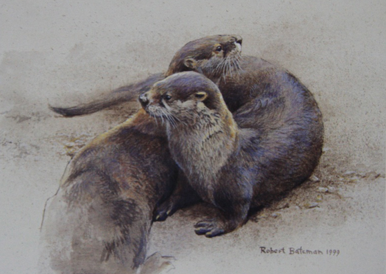 Robert Bateman Otters Cavorting