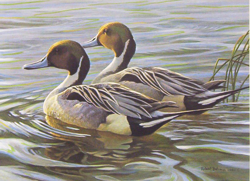 Robert Bateman Pintails In Spring 1988 Stamp print