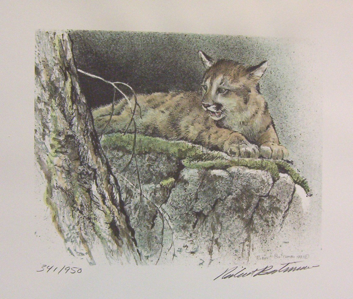 Robert Bateman Cougar Mountain Lion