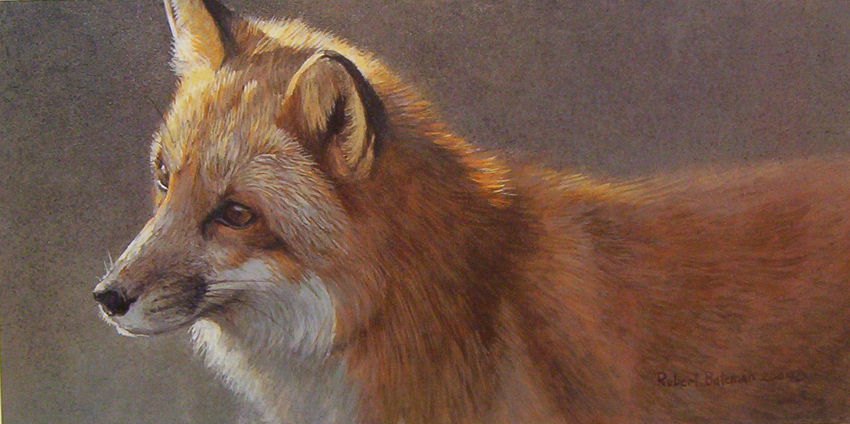Robert Bateman Questing Red FoxT