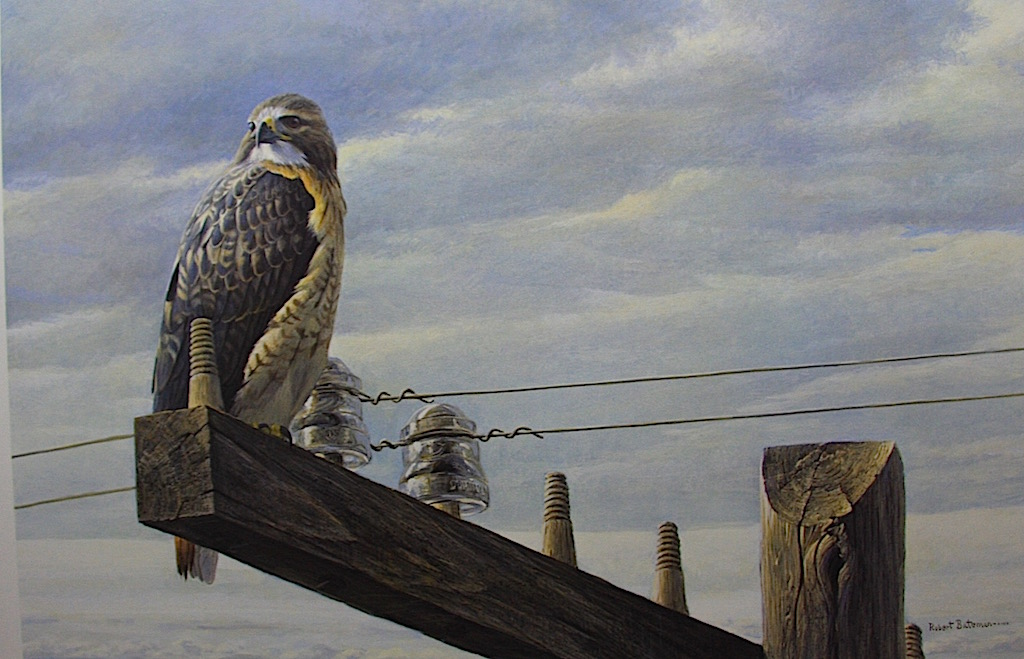 Robert Bateman at the Road Side Red Tailed Hawk