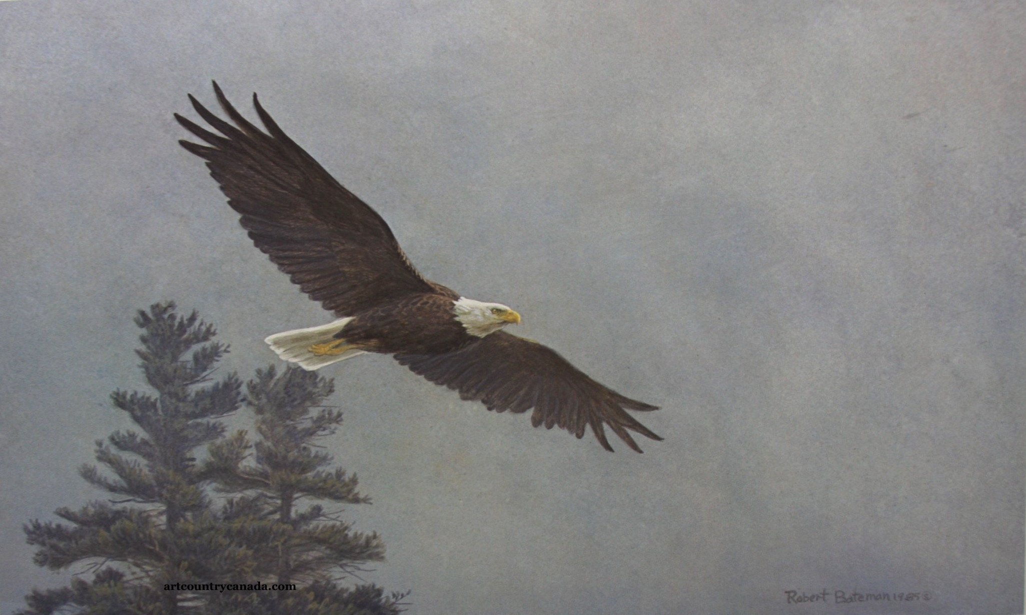 Robert Bateman Bald Eagle Flying