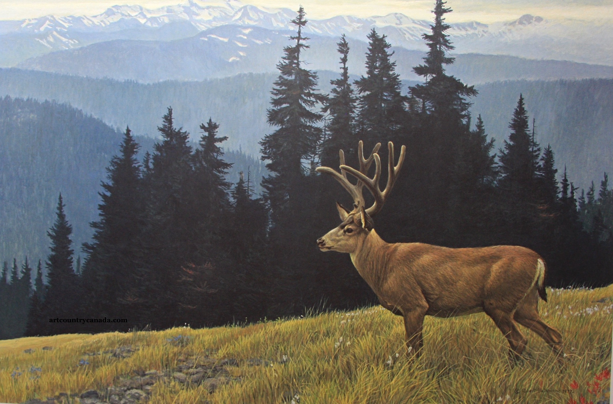 Robert Bateman Black-Twiled Deer in the Olympics