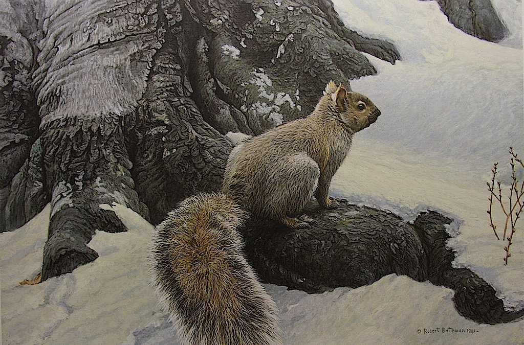 a life and career of robert bateman Robert bateman (painter) topic robert bateman , oc obc rca (born 24 may 1930) is a canadian naturalist and painter , born in toronto , ontario  career robert was always interested in art, but never intended to make a living from it.