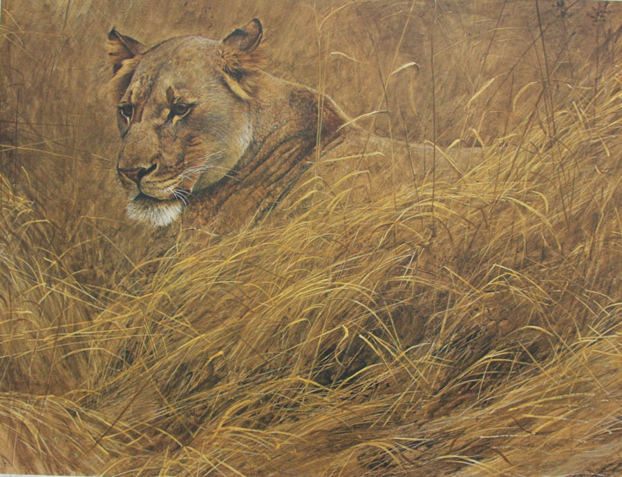 Robert Bateman In The Grass Lioness