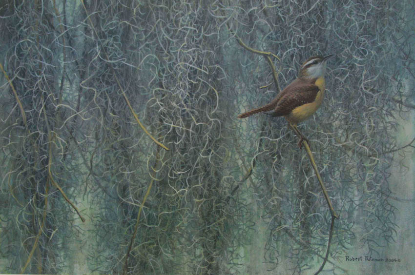 Robert Bateman Song of the South carolina Wren