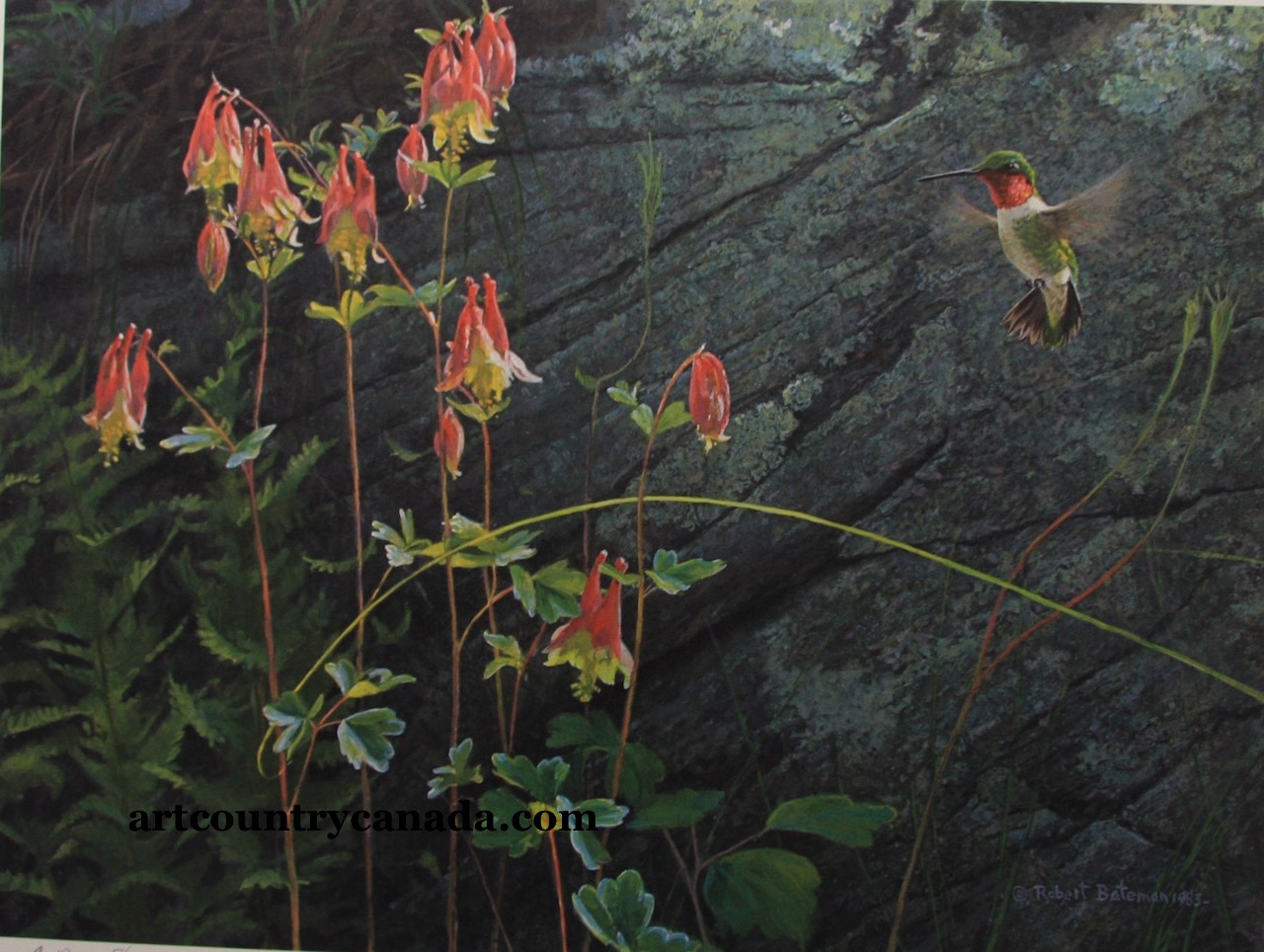 Robert Bateman Ruby Throated Hummingbird and Columbine
