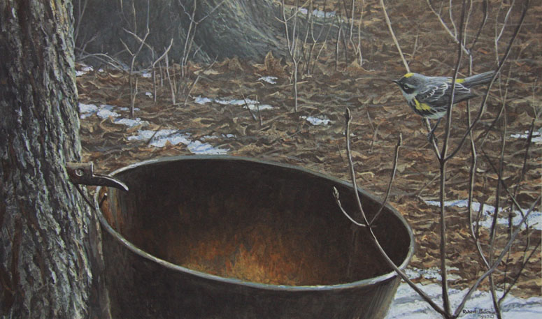 Robert Bateman Sap Bucket and Myrtle Warbler