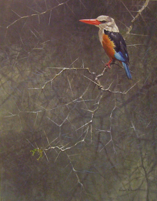 Robert Bateman Grey-Hooded Kingfisher