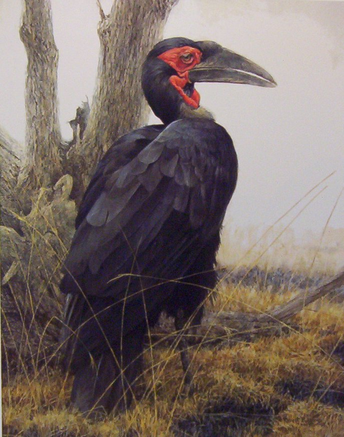 Robert Bateman Ground Hornbill