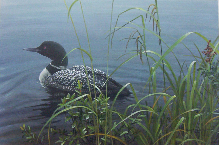 Robert Bateman Shoreline Common Loon