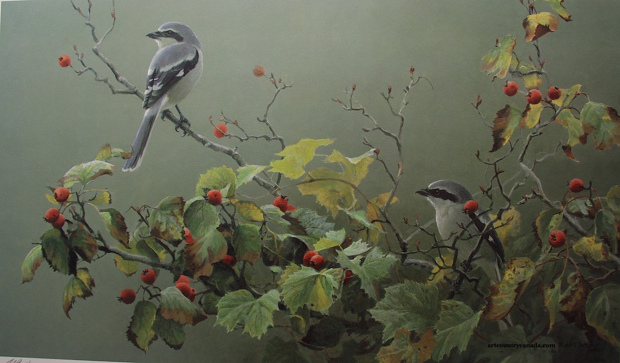 Robert Bateman Shrike Pair and Hawthorn
