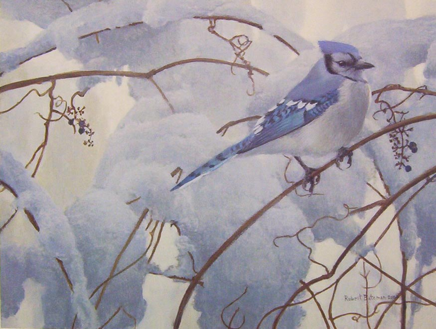 Robert Bateman Snowy Morning Blue Jay