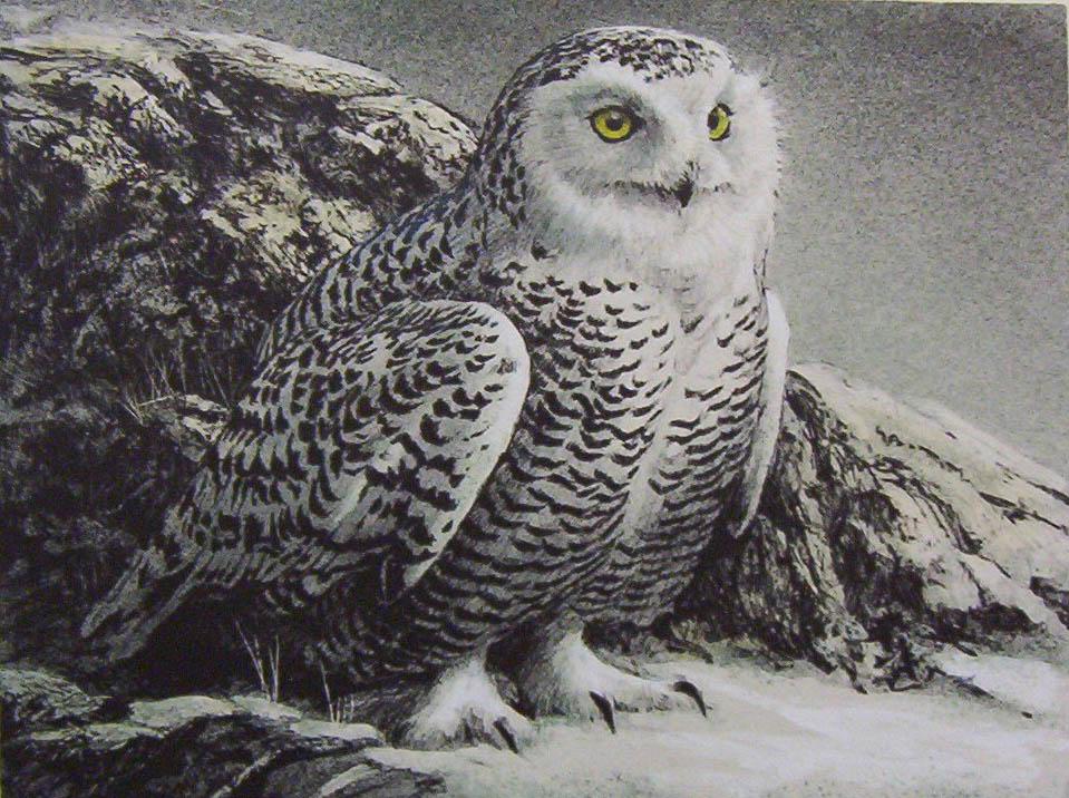 Snowy Owl Painting