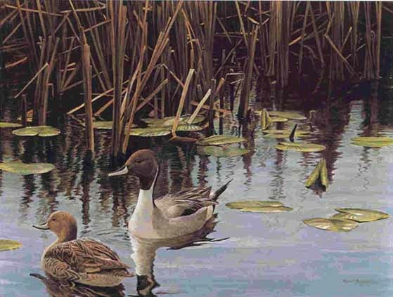Robert Bateman Spring Marsh Pintail Pair