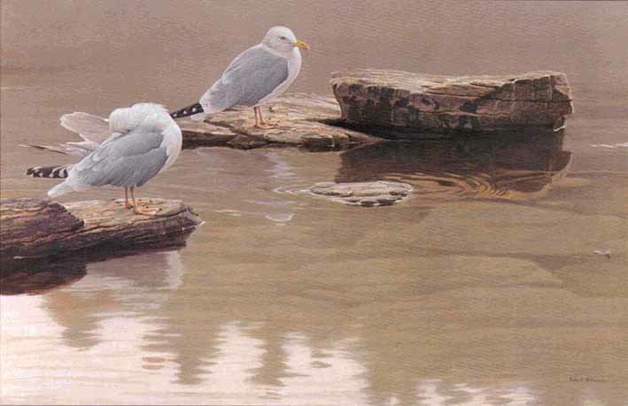 Robert Bateman Still Morning Herring Gulls