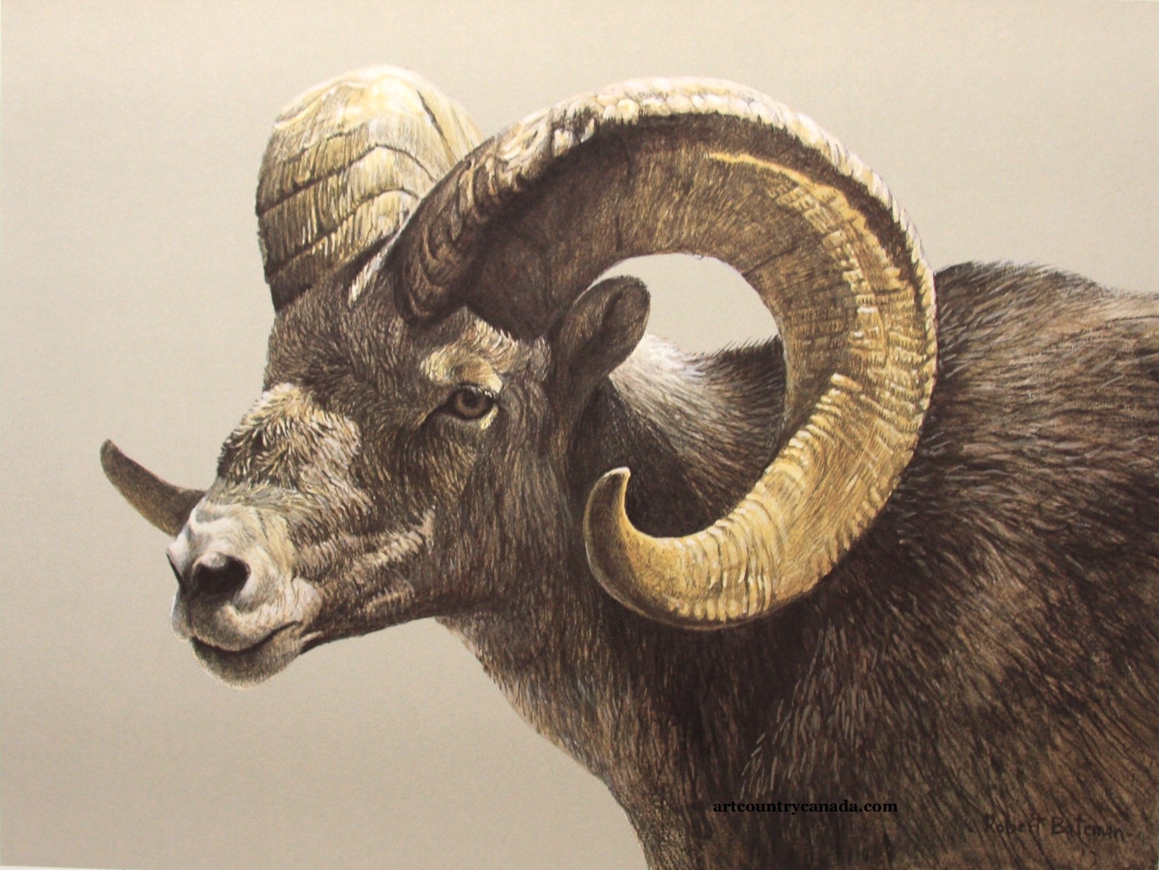 Robert Bateman Stone Sheep Ram