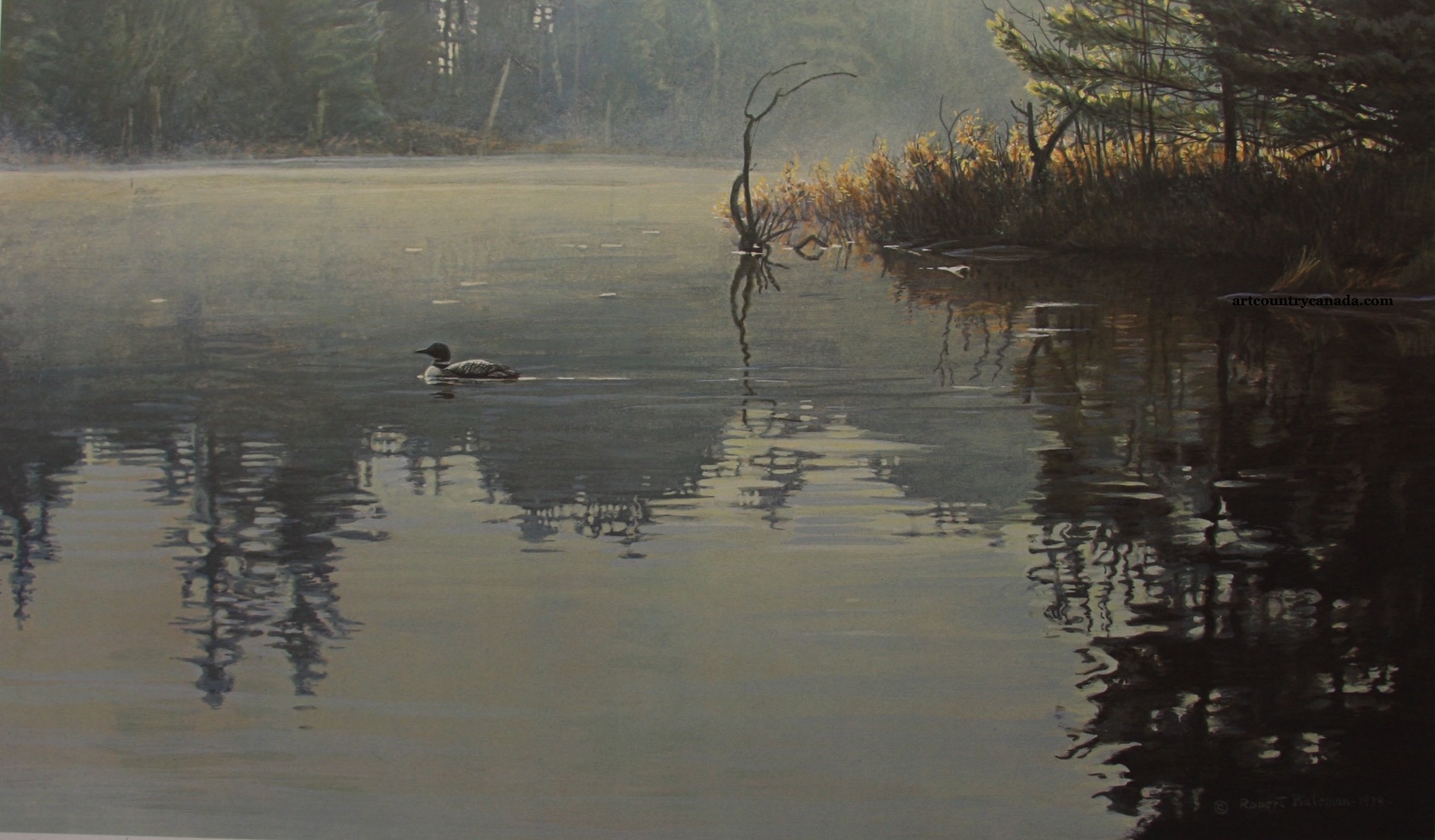 Robert Bateman Summer Morning Loonm