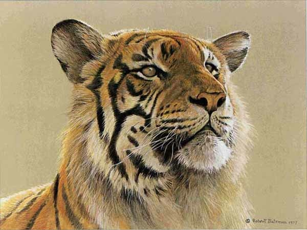 Robert Bateman Tiger Portrait