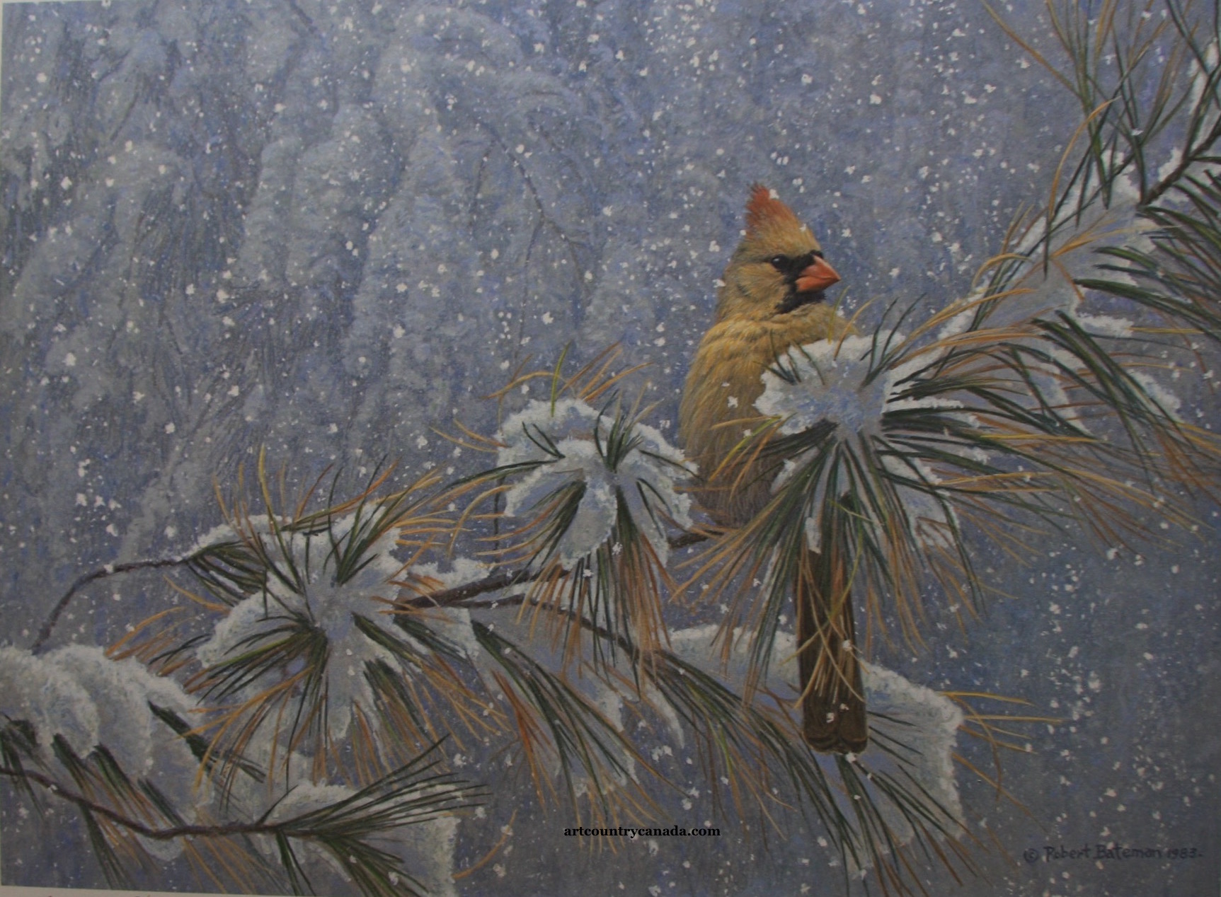 Robert Bateman Winter Cardinal