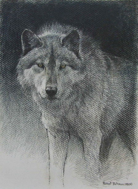 Robert Bateman Wolf Sketch Original Lithograph