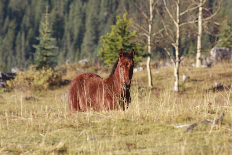 Bragg Creek Wild Horse