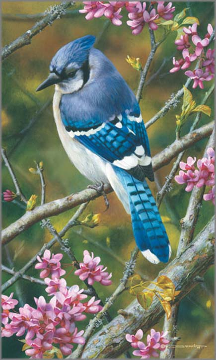 Carl Brenders Flash Of Sapphire Blue Jay