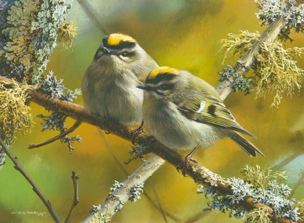 Carl Brenders Crowning Glory Golden Crowned Kinglets