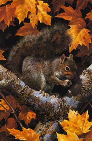 Carl Brenders Golden Season Gray Squirrel