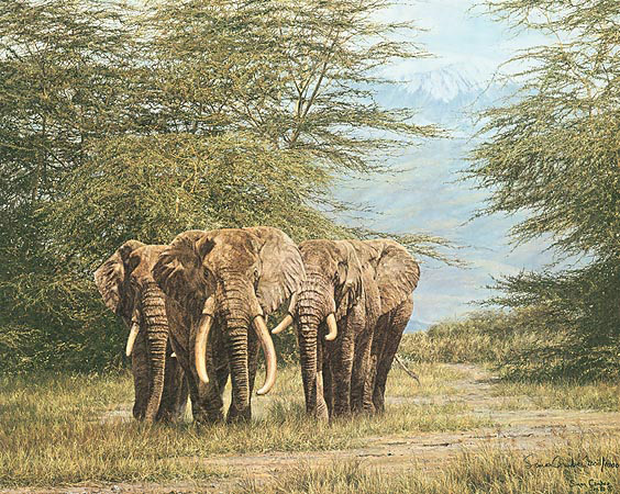 Simon Combes Amboseli Ancients