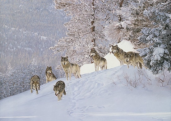 Simon Combes Snowpack Wolves