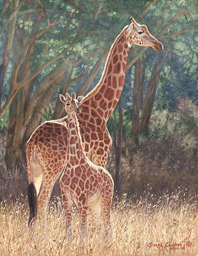 Simon Combes Staying Close Giraffes